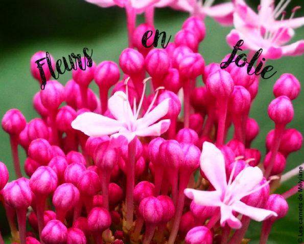 Fleurs en folies